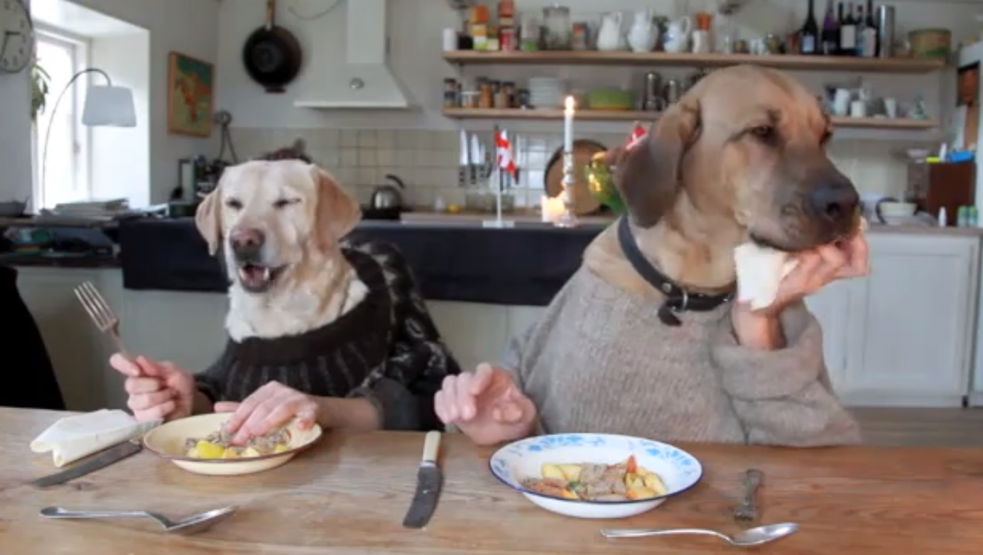 Two dogs dining at a restaurant! New Viral