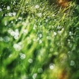 rain drops on gras